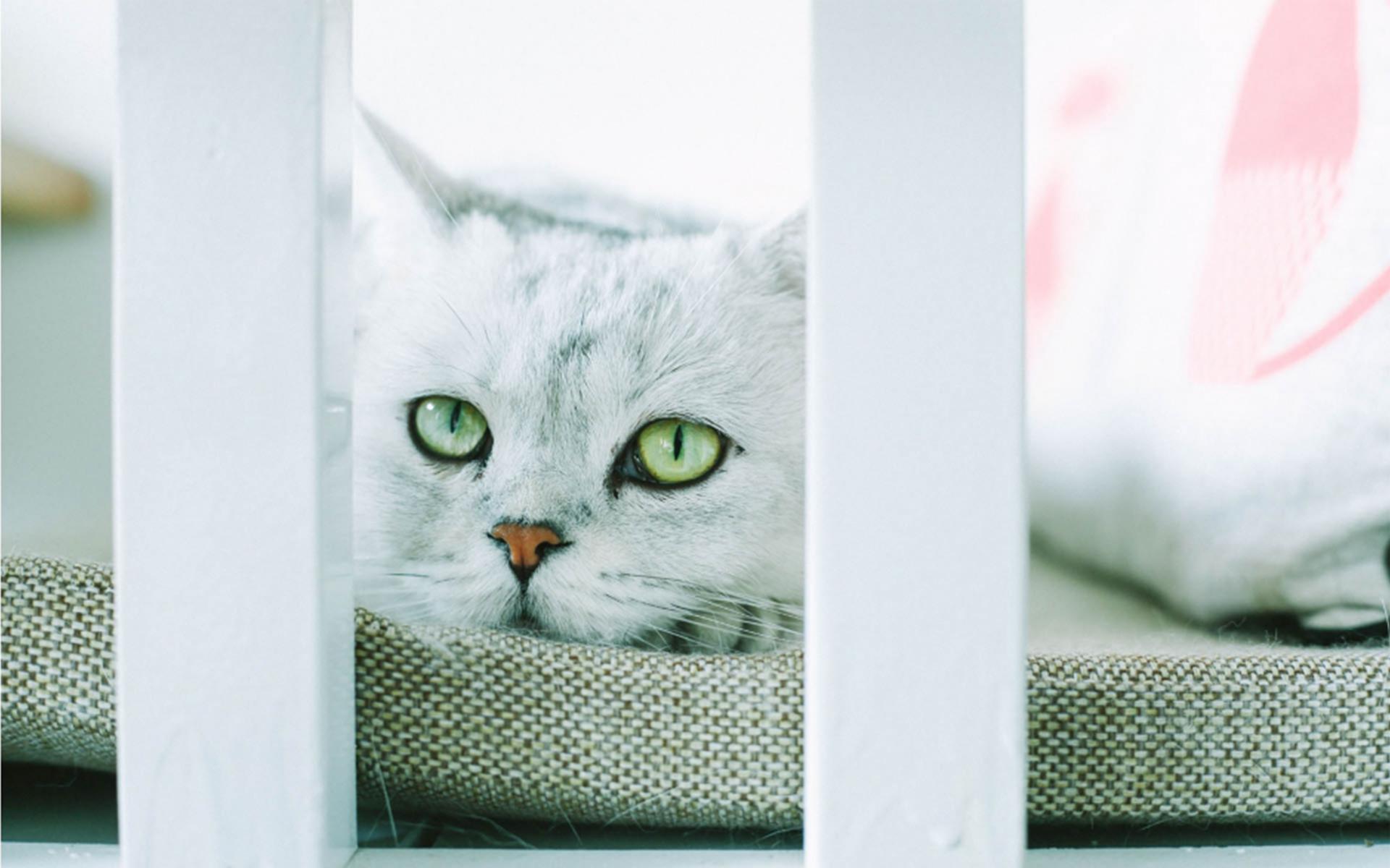 漂亮宠物可爱的小猫咪高清桌面壁纸
