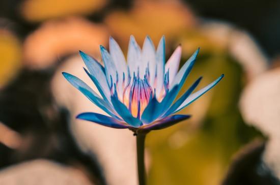 <超清唯美花卉图片电脑壁纸
