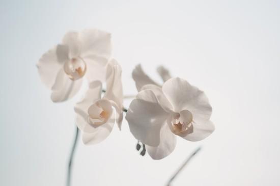 清新淡雅花卉图片桌面壁