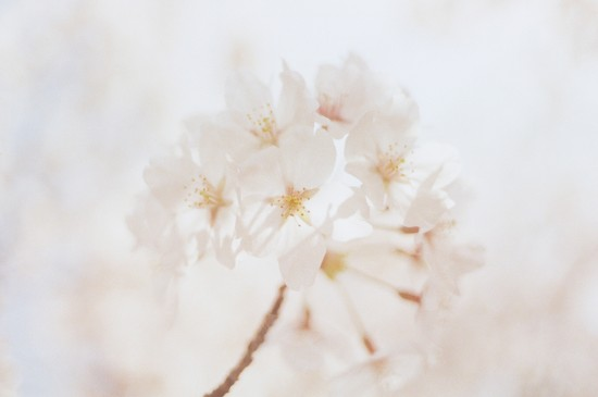 清新淡雅花卉唯美植物图