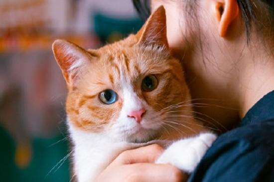 慵懒可爱蠢萌眼神严肃猫