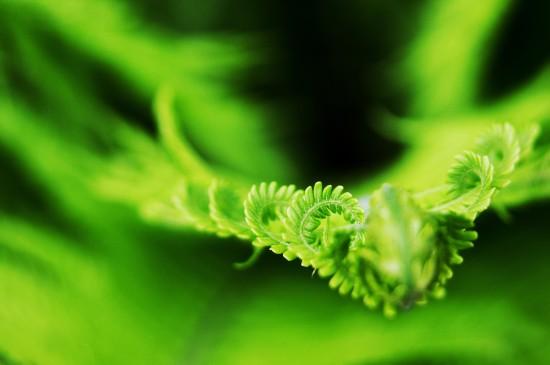 绿色护眼植物图片高清桌