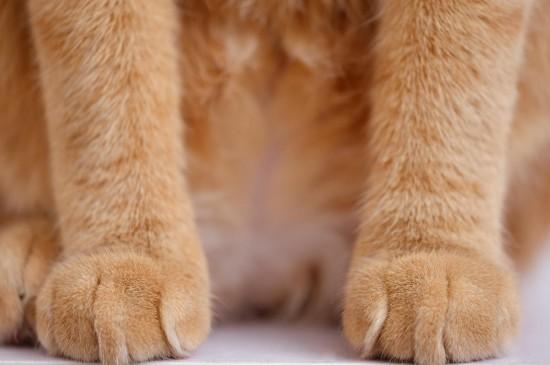 毛绒绒的猫爪萌系桌面壁纸