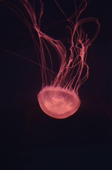 水母图片摄影手机壁纸