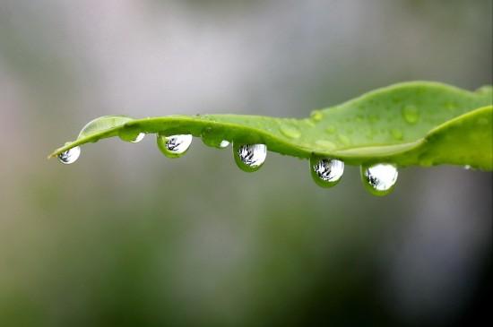 树叶上的露珠高清桌面壁纸