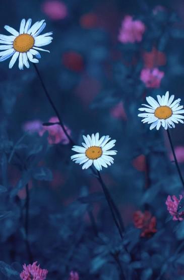 清新好看的花卉图片手机壁纸