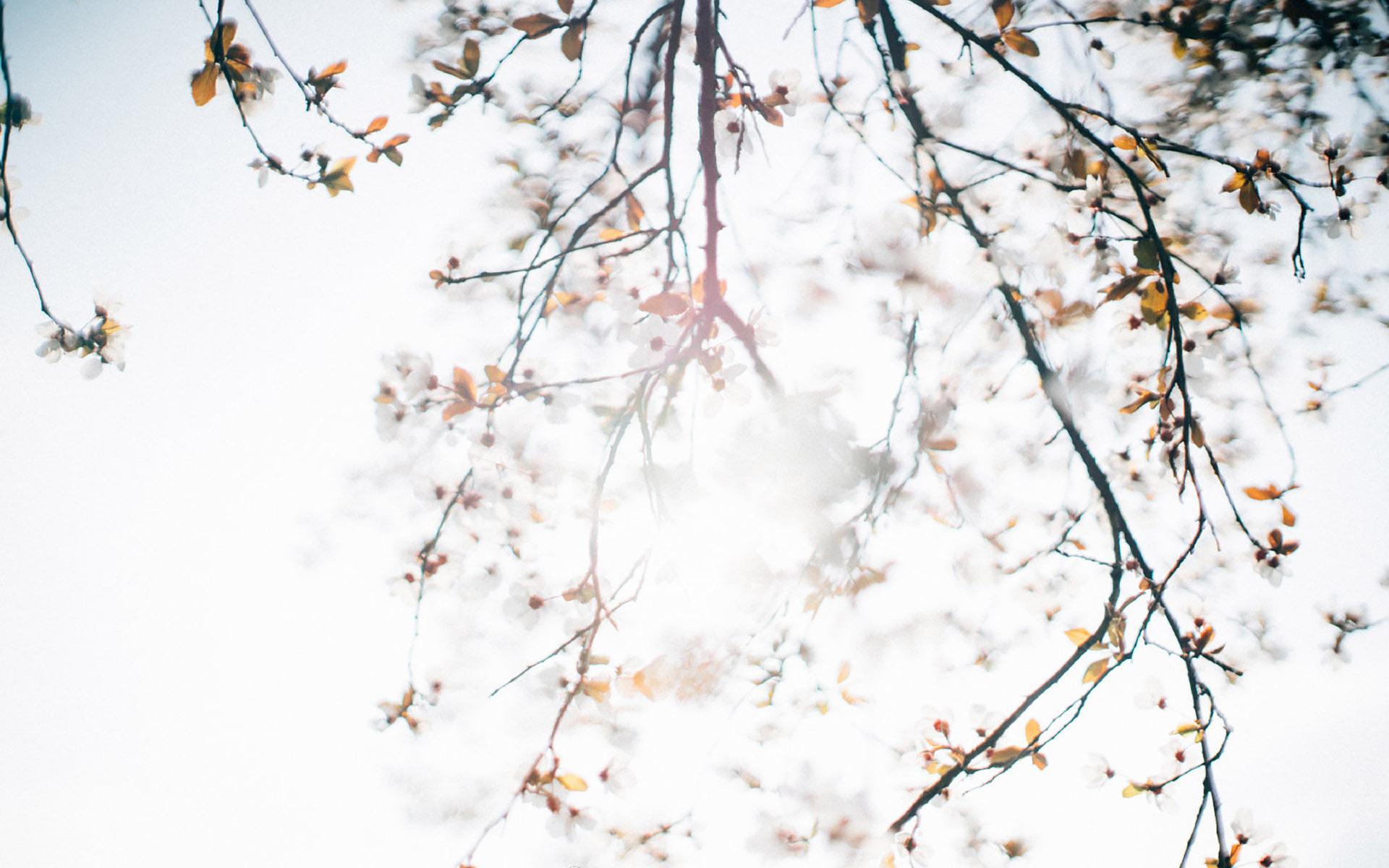 清新夏日风景唯美花卉简约桌面壁纸