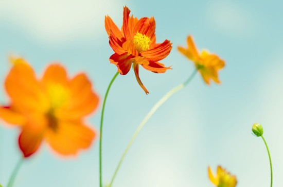 花卉摄影也能如此特别小清新花卉摄影桌面壁纸