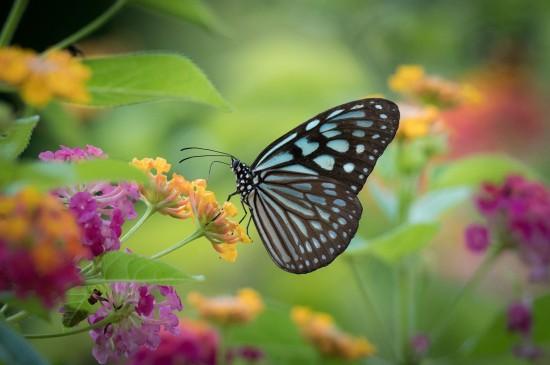 唯美梦幻的蝴蝶图片桌面