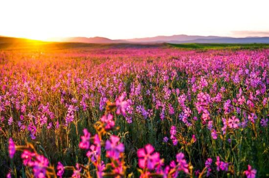 唯美护眼的花卉图片桌面壁纸
