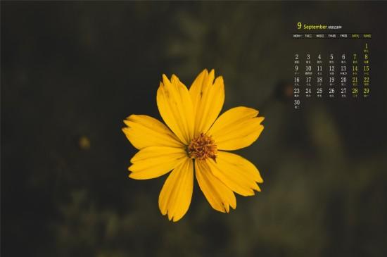 2019年9月漂亮微距花卉摄影高清日历壁纸