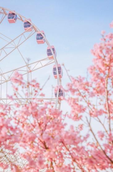 唯美樱花摄影手机壁纸图片