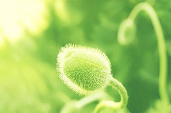 唯美清新植物花卉图片高