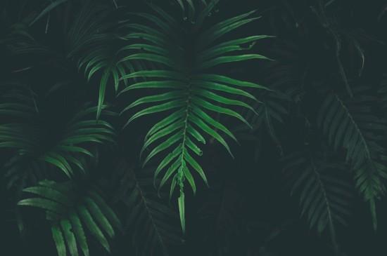 <绿色植物高清摄影图片电脑壁纸