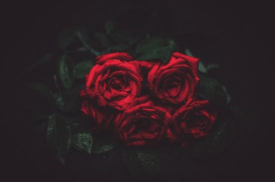 <唯美绚丽的植物花卉图片桌面壁纸