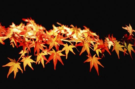 <秋天来了唯美自然风景壁纸图片