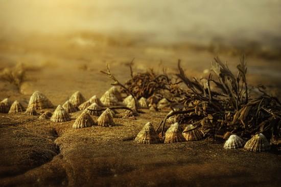 优美迷人的海滩风景桌面