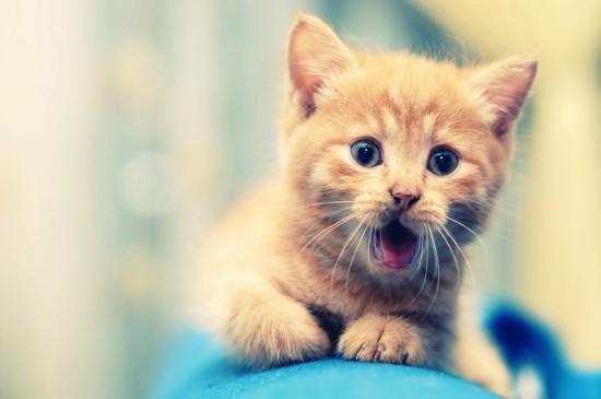 软萌可爱的猫咪图片桌面壁纸