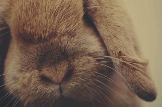 萌系可爱的小白兔桌面壁