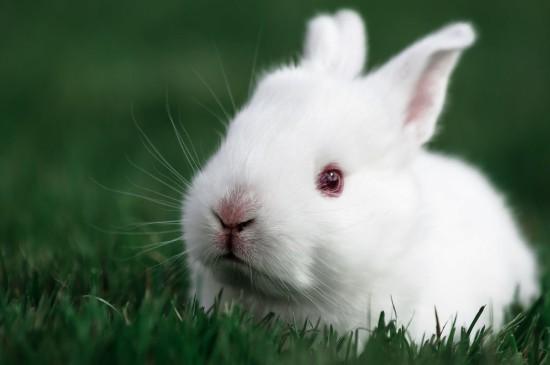 可爱萌系小白兔桌面壁纸