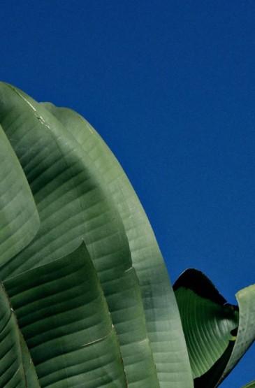 <原生态绿色植物高清手机壁纸