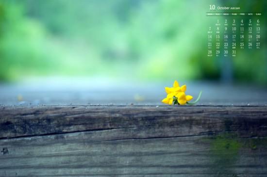 2019年10月唯美植物花卉日历壁纸
