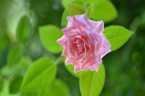 清新养眼花卉高清桌面图