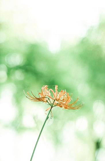 小清新治愈花卉圖片手機壁紙