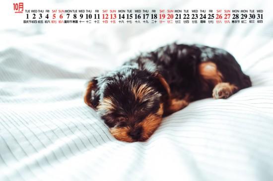 2019年10月可爱小黑狗日历壁纸