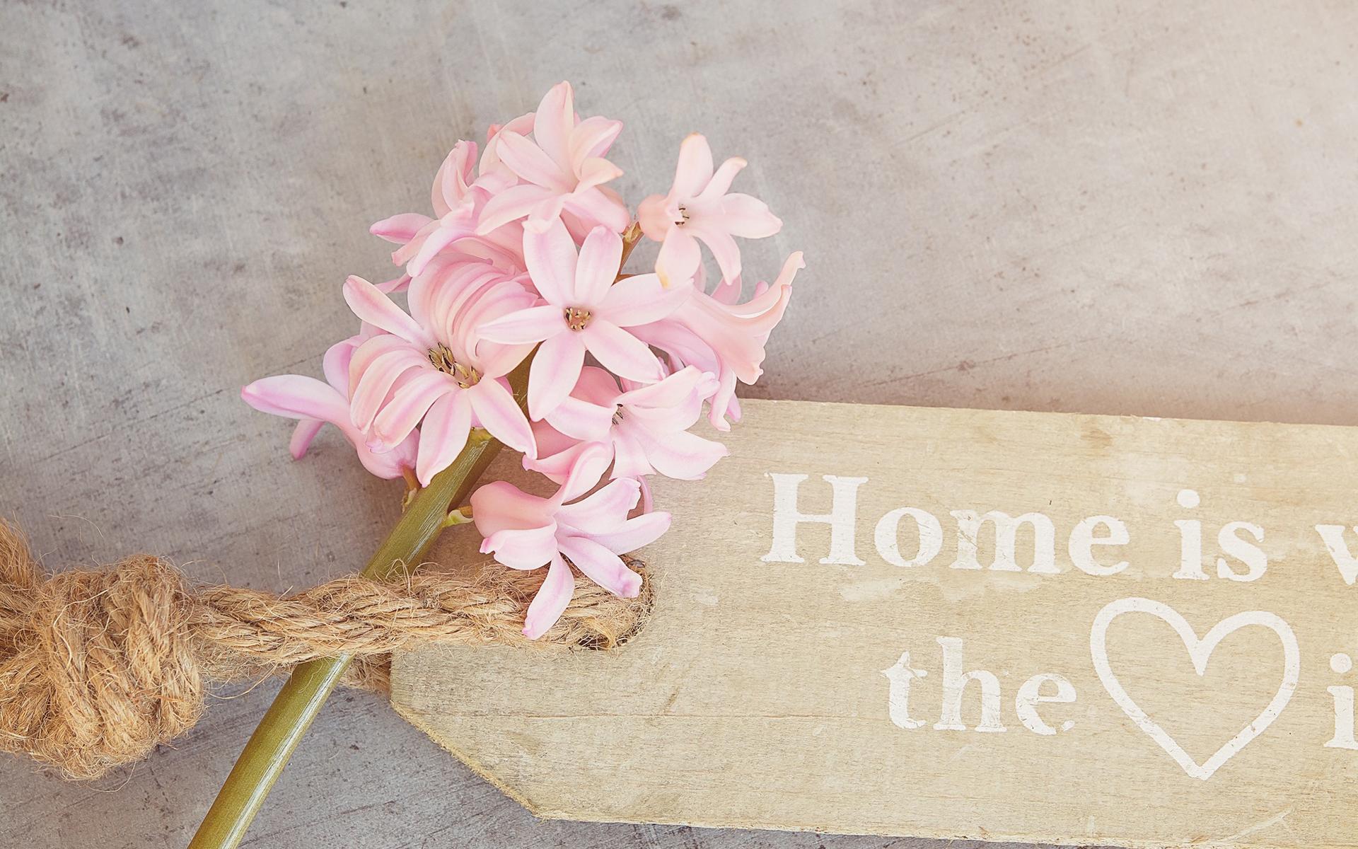粉色花卉桌面图片