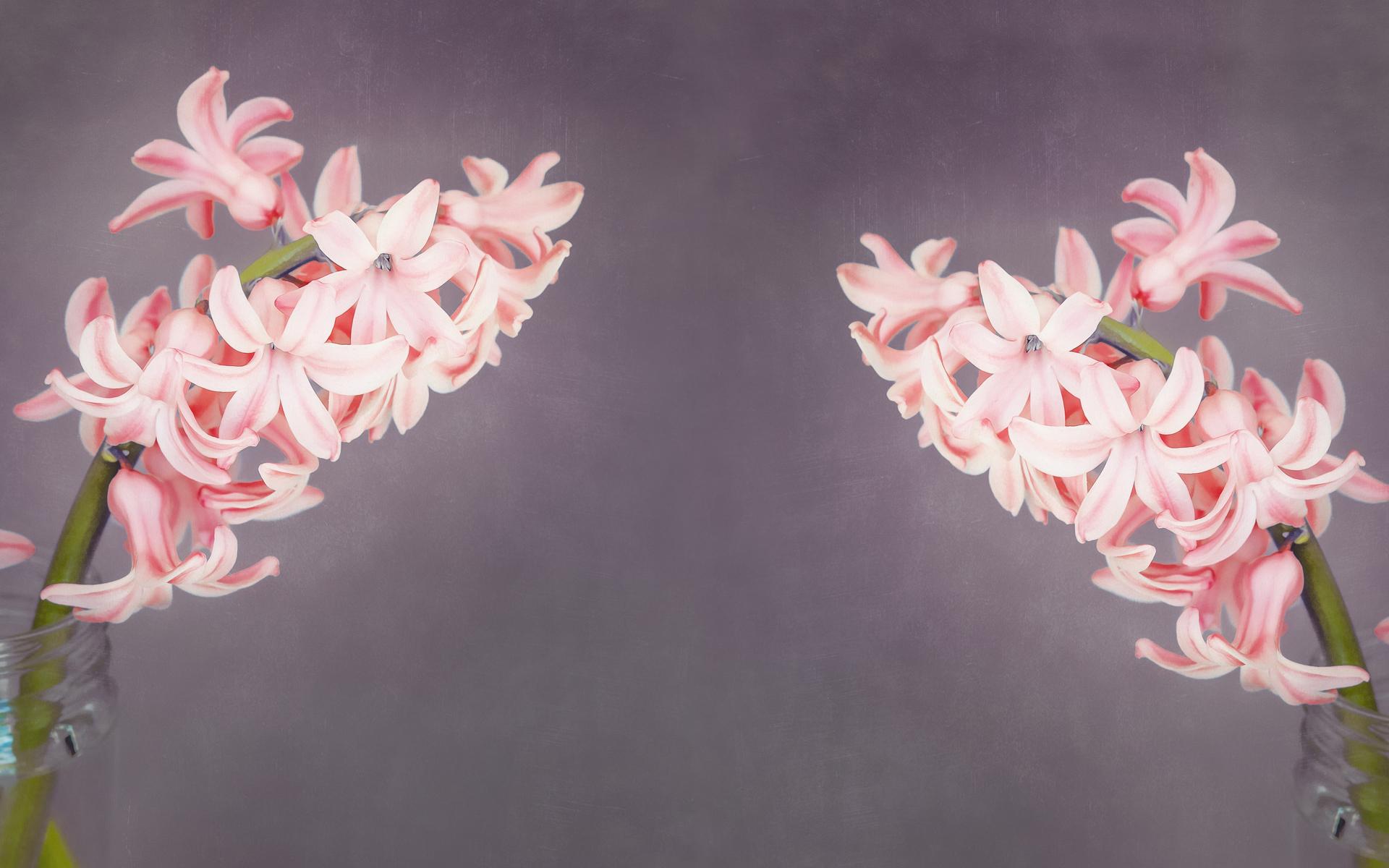 唯美花卉桌面图片