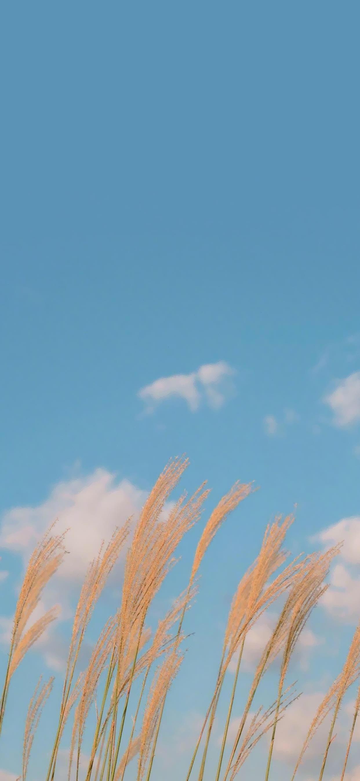 唯美小清新自然风景图片