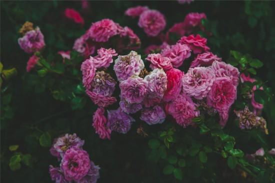 唯美養眼花卉圖片桌面圖片
