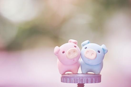 可爱软萌的小猪静物图片桌面壁纸