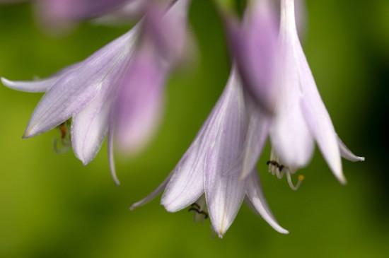 花卉植物摄影写真图片桌
