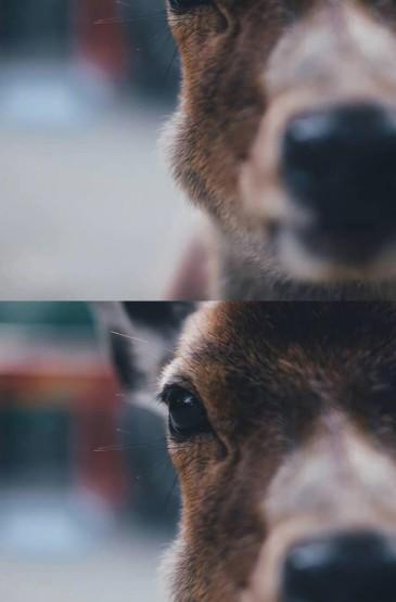 灵性动物摄影高清手机壁纸