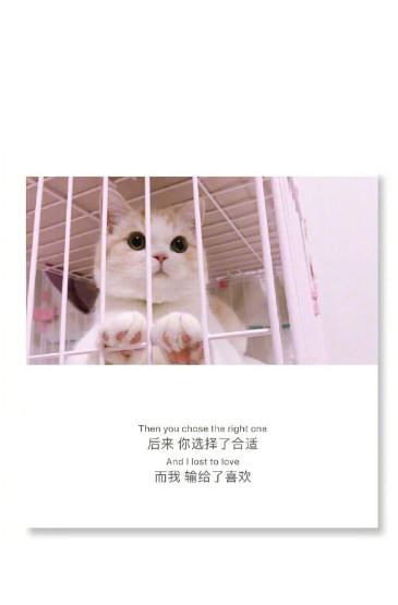 猫咪背景文字图片手机壁纸