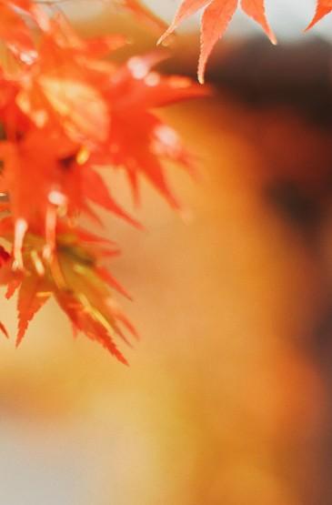 秋日风景摄影高清手机壁纸