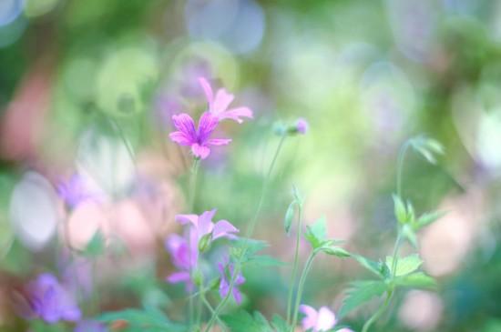 唯美好看的花卉图片电脑壁纸