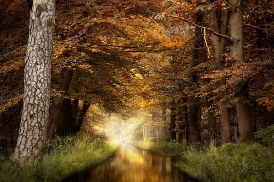 唯美秋天自然风景树木图片桌面壁纸