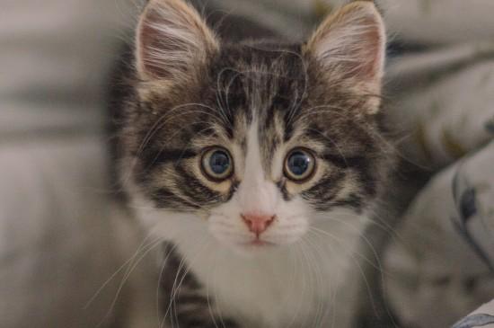 可爱的小猫咪高清电脑壁纸