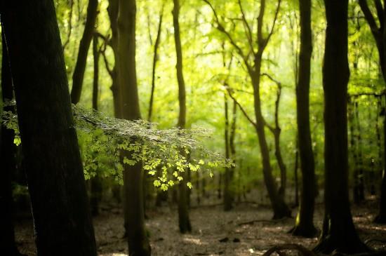清新唯美秋季森林风景桌面壁纸