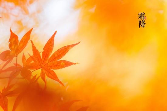 霜降唯美枫叶图片桌面壁纸