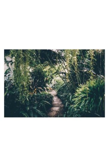 绿色护眼植物风景手机壁