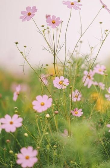 <清新花朵图片摄影手机壁纸