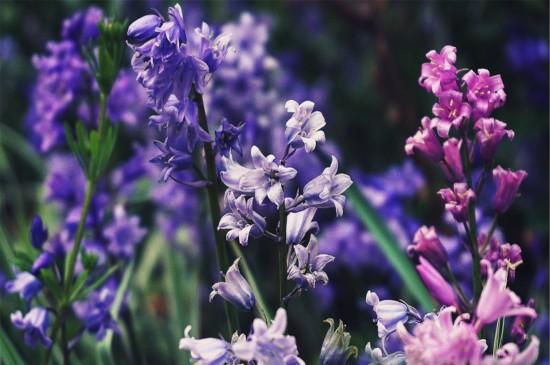 <花卉植物唯美电脑桌面壁纸