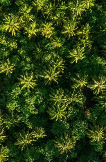 <大自然风景摄影高清手机壁纸