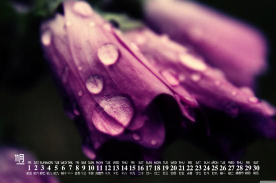 2019年11月唯美花卉日历