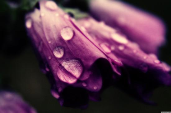 唯美花卉上的露珠圖片桌面壁紙