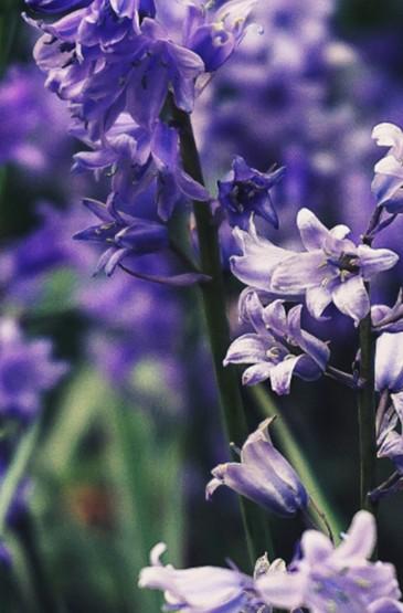 清新好看小花朵植物手机壁纸